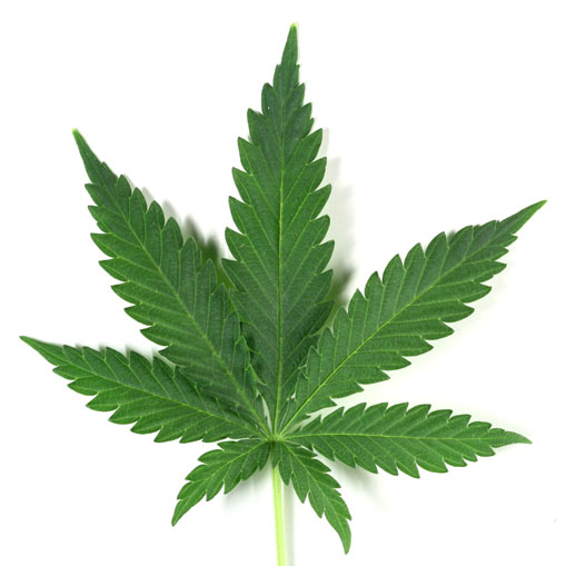 Marijuana-leaf_sized