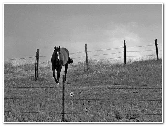 Nebraska Ranch 1 B-W sm frame